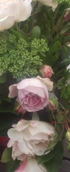 roses-004-copie1267463415.1299061115.jpg