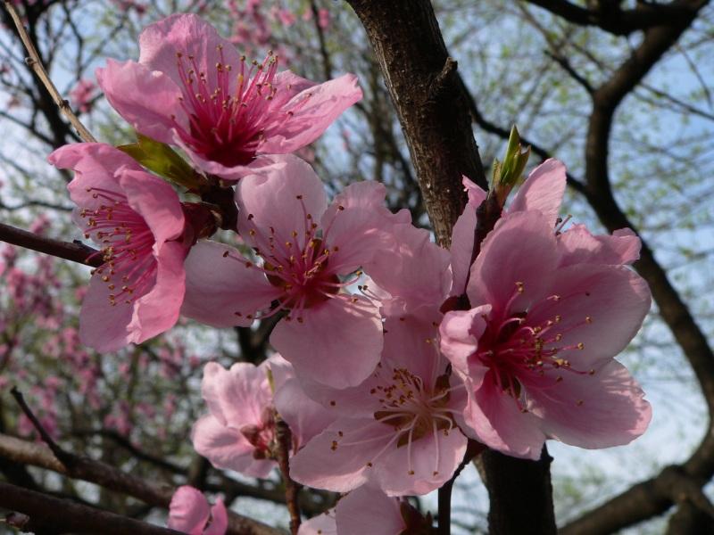 route vers le printemps