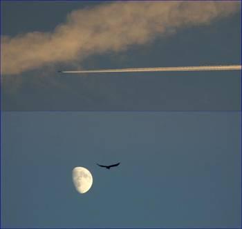 oiseau-lune-avion.1260550825.thumbnail