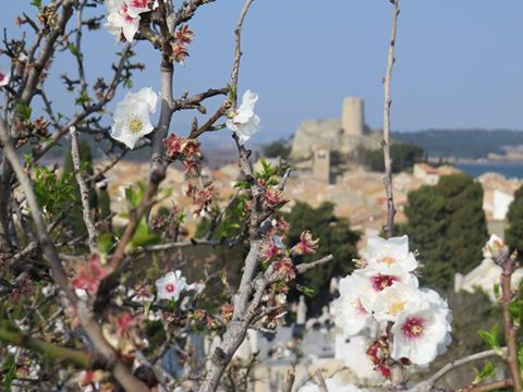 gruissan printemps