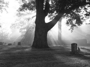 brouillard-cimetiere_2646091